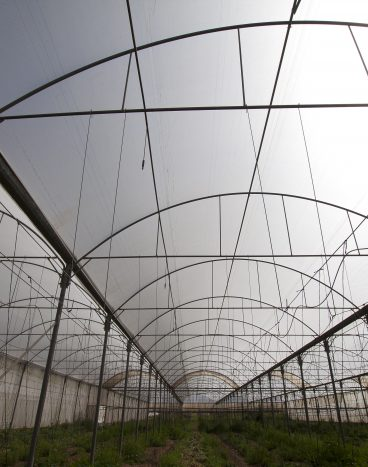 """""""פלרינג"""" סייד+גג לחקלאות"""